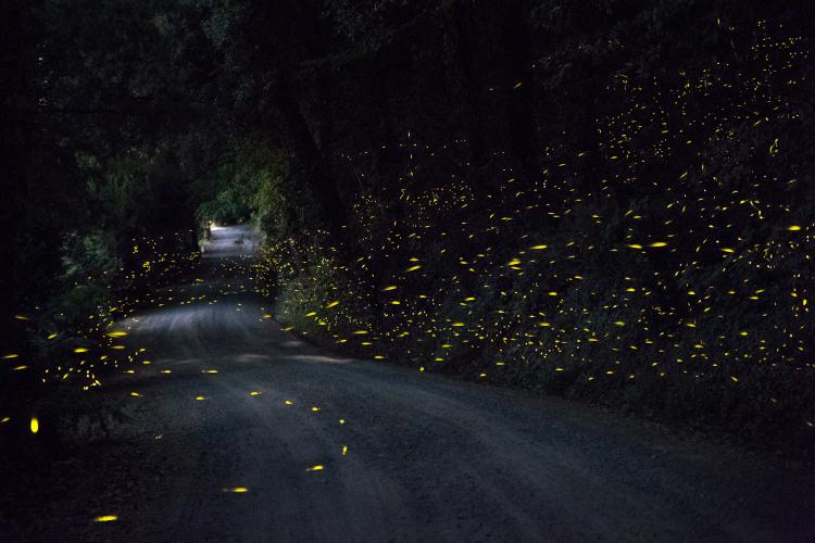 LED gatubelysning inspirerad av naturen | SWARCO